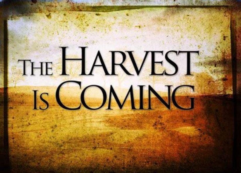 cropped-harvest-is-coming.jpg