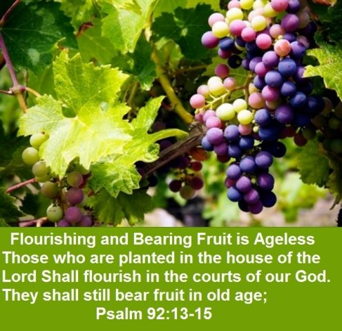 bear fruit in old age